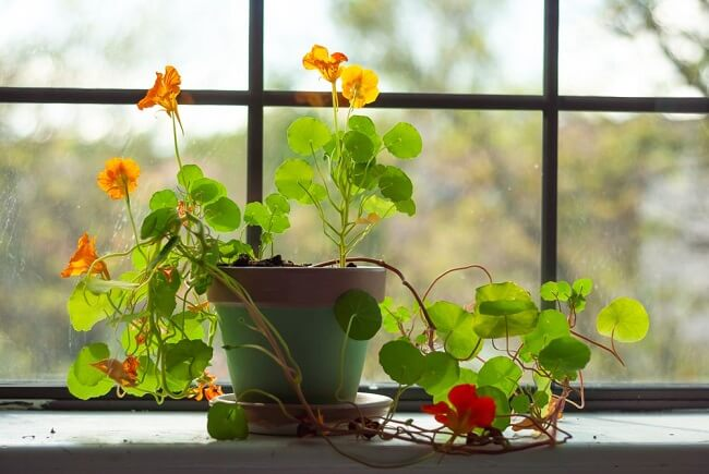 10 Physical And Mental Benefits of Houseplants