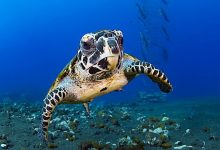 As Marine Life Flees The Equator, Global Mass Extinction Is Imminent: Scientists
