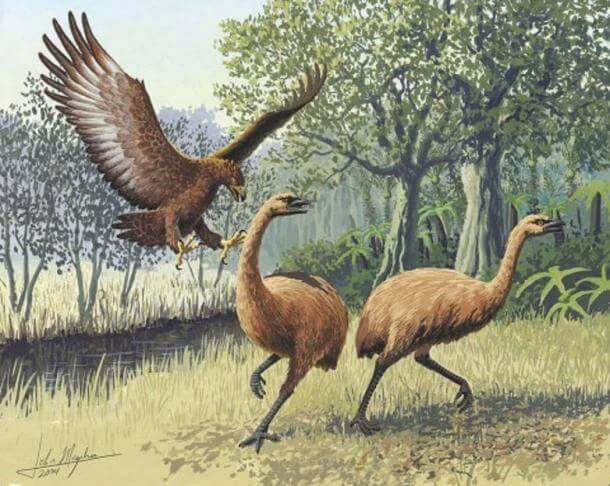 Giant Haast's Eagle attacking New Zealand Moa.