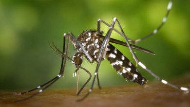 "Florida Set to Release a Billion Genetically Modified Mosquitoes in ""Nightmare"" Experiment"