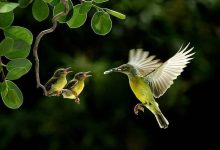 Bird in Air