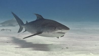 Fins From Up To 73 Million Sharks Are Used in Shark Fin Soup Every Year