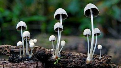 Why Mushrooms Increase Longevity