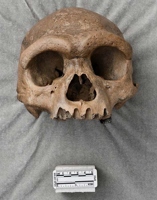 The cranium nicknamed Dragon Man, which could be a new species of ancient human. (NHM)