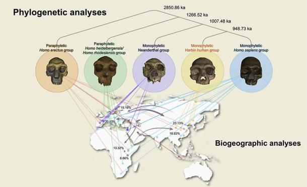 Here the phylogenetic analysis puts the skull in the context of human development. (The Innovation / Cell)