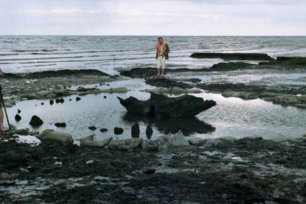 """A view of Seahenge several months after discovery by which time archaeologists had already removed some of the timber stakes and sawn a chunk out of the central """"altar,"""" which comprised the inverted trunk of an oak tree."""