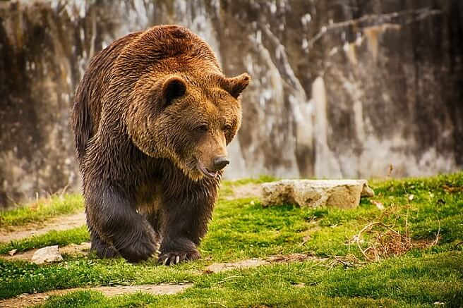 Watch: Tourist's Close Call With Grizzly Bear Results In Federal Charges
