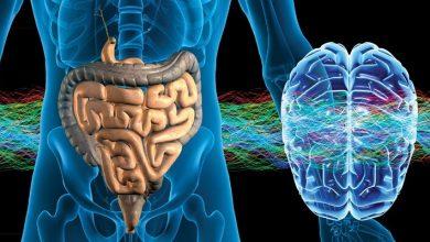 The Gut-Brain Connection: Boost Mental Health Through The Gut