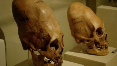 DNA Tests Reveal That Paracas Skulls Are Not Human