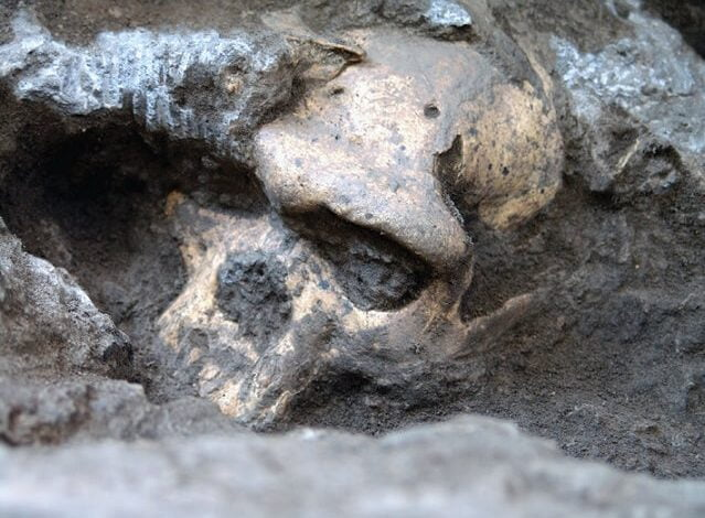 Skull 5 - A Million Years Old Human Skull Forced Scientists To Rethink Early Human Evolution