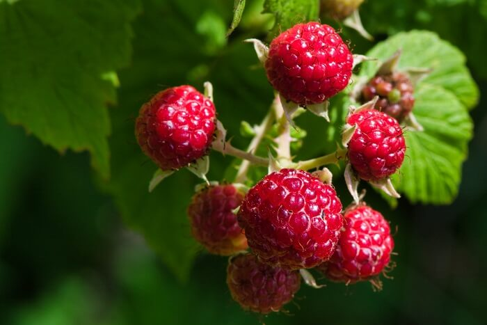 Five Healthiest Late Summer Produce Picks